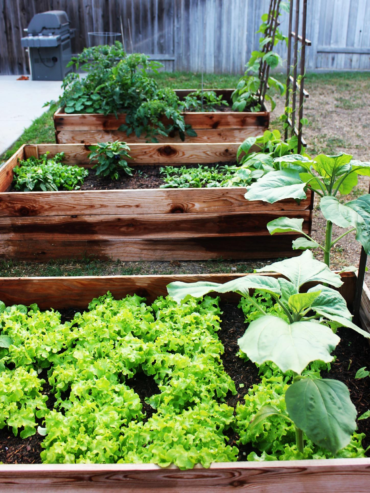 SoCal Garden